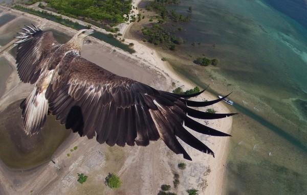 eagle_ori-OK